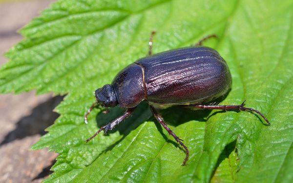 Sự thật thú vị về bọ cánh cứng